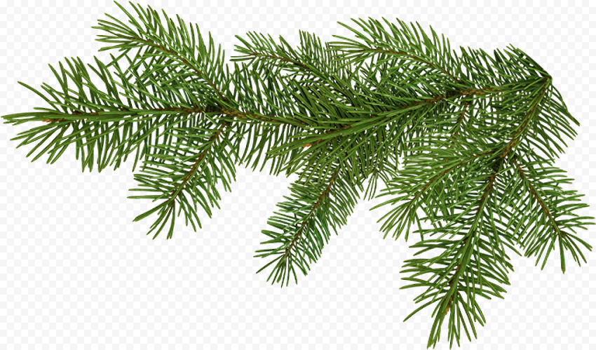 Tree Pine Branch Christmas In 2021 Christmas Leaves Pine Branch Christmas Branches