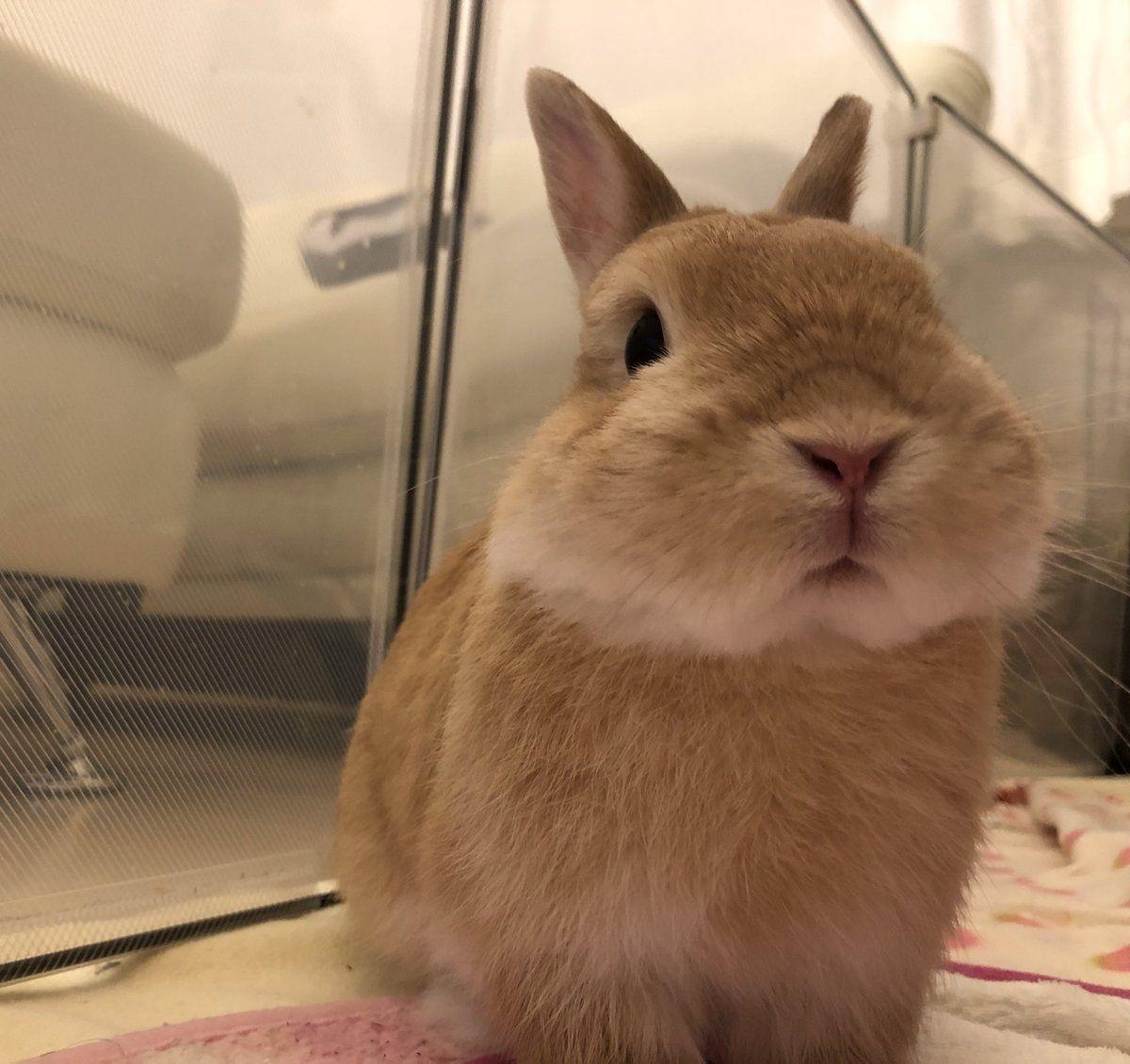 ともみ on Cute animals, Cute bunny, Cute