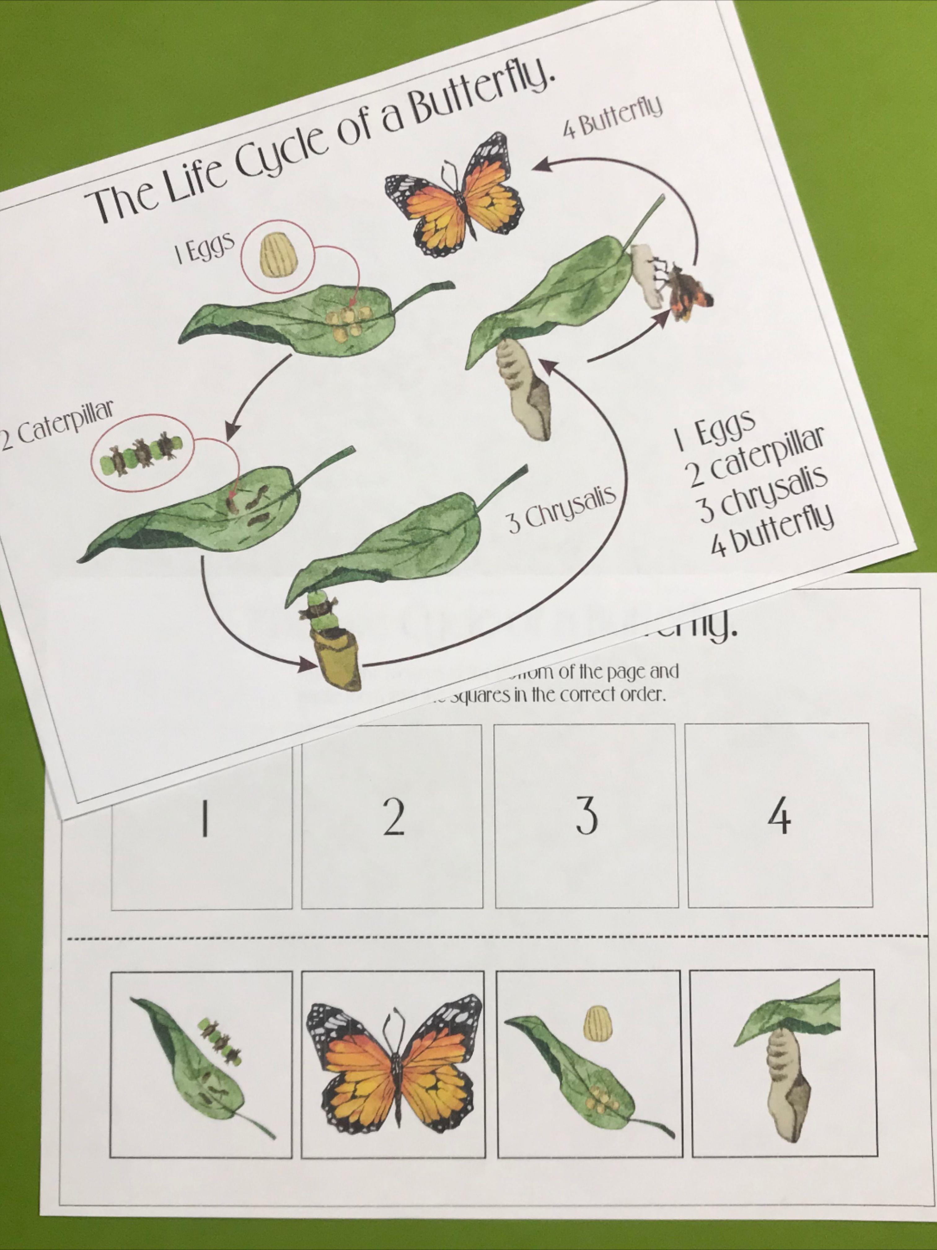 Predownload: Butterfly Life Cycle Preschool Printables Curriculum Butterfly Life Cycle Preschool Life Cycles Preschool Butterfly Life Cycle [ 4032 x 3024 Pixel ]