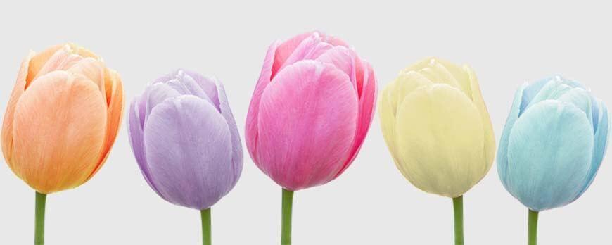 Angesagte Farben für Frühling und Sommer 2016