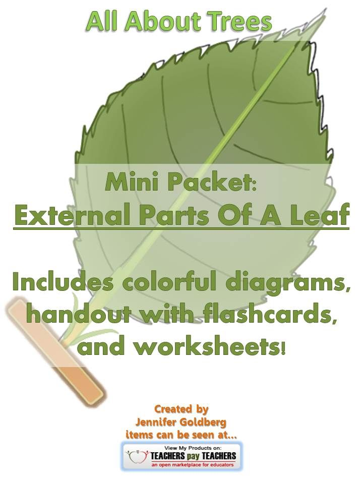All About Trees Mini Packet External Parts Of A Leaf Pinterest