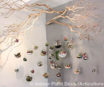 "Aerium Planter from ""Indoor Plant Décor"" by Kylee Baumle and Jenny ..."