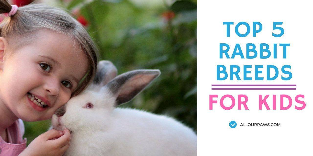 Top 5 Rabbit Breeds As Pets For Your Kid Rabbit Breeds Pet Rabbit Care Animals For Kids
