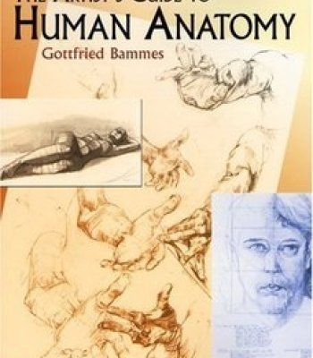 The Artist S Guide To Human Anatomy Pdf Anatomy For Artists Artists Guide Human Anatomy Drawing