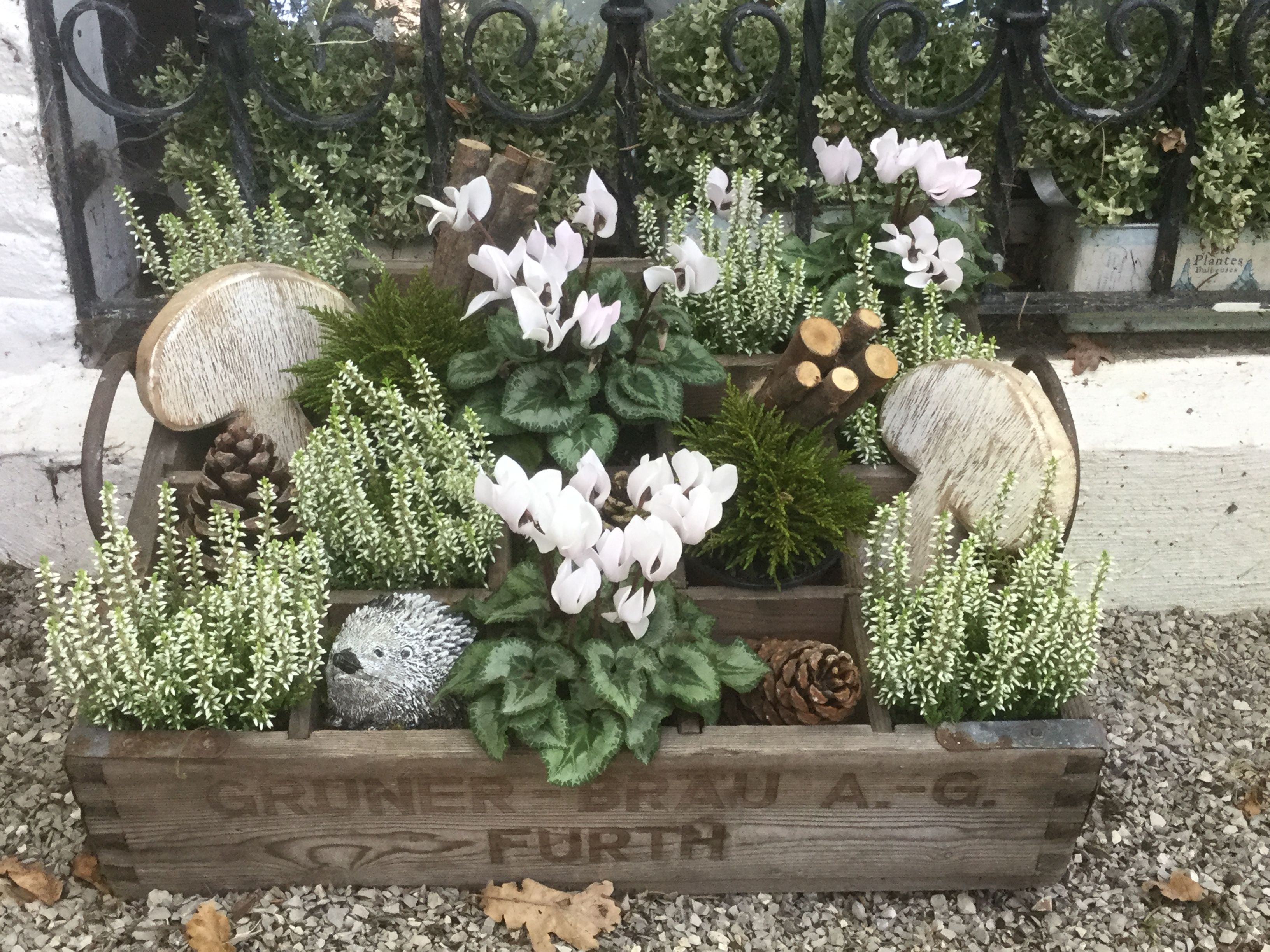 container planting flowering winter plants pinterest
