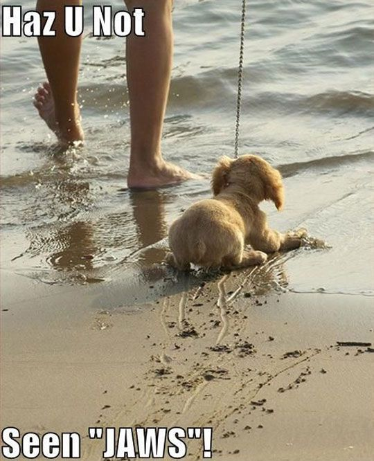 Funny Puppy At The Beach Funny Animal Pictures Of The Day  Pics