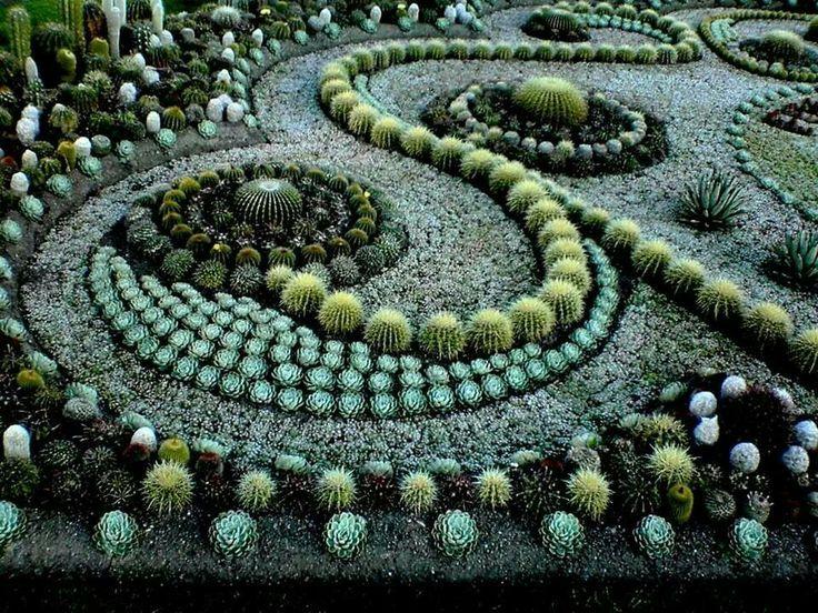 Cactus And Succulent Garden Design Good Reviews About Home Design Ideas Succulents Garden Cacti And Succulents Succulents