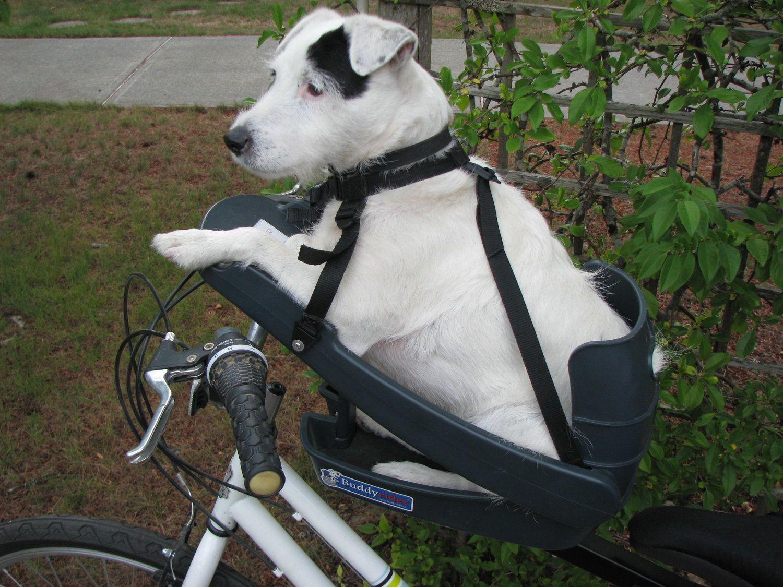 Buddy rider dog bike seat in 2020 biking with dog dog
