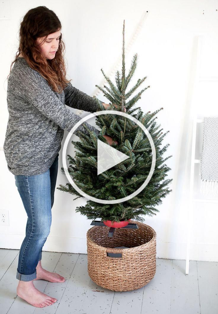 Put a bucket upside down in a large basket; small tree in