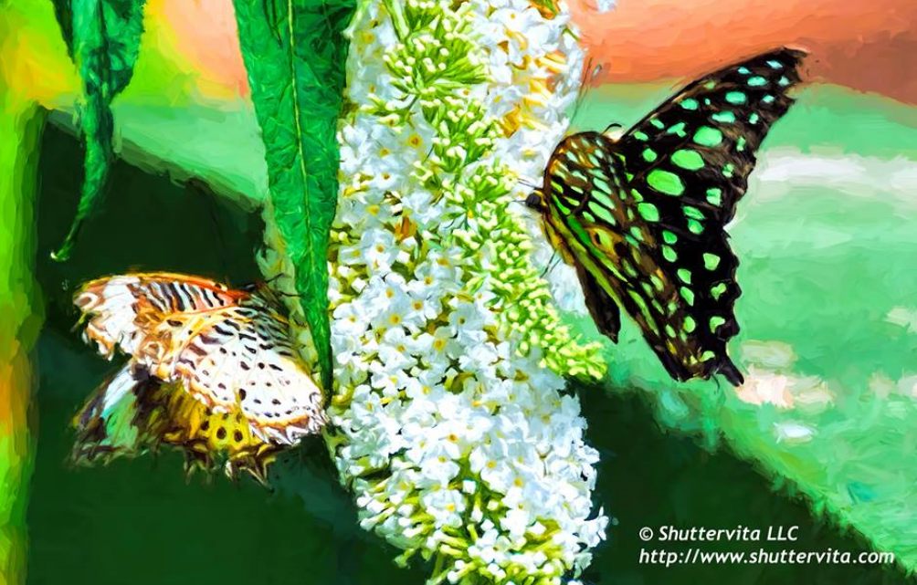 Absolutely gorgeous, Dennis V!  Thanks for sharing this great capture from Butterfly Wonderland with us!