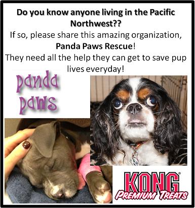 Panda Paws Rescue Vancouver Wa Paws Rescue Paw Rescue