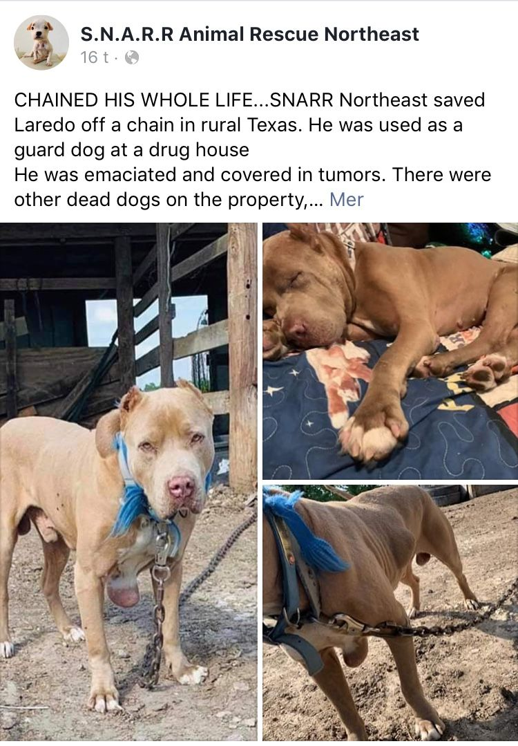 8 13 19 Laredo Story Ij2 Dogs Dead Dog Animal Rescue