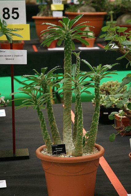 palm tree cactus   Sandra DS   Flickr   Name Cactus Palm Tree