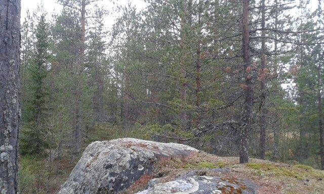 Pienillä kallion kivillä
