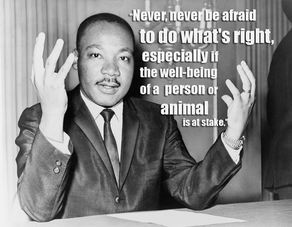 Animal Rights Quotes Never Never Be Afraid To Do What's Right Especially If The Well