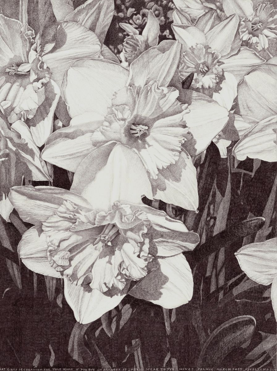 Sublime beauty daffodil flowers organic shapes and graphite