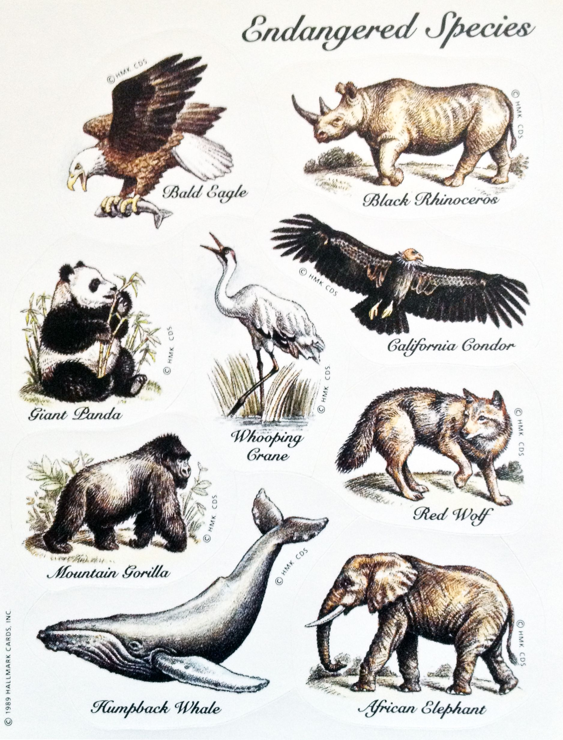 Hallmark Endangered Species Sticker Sheet Animal Stickers