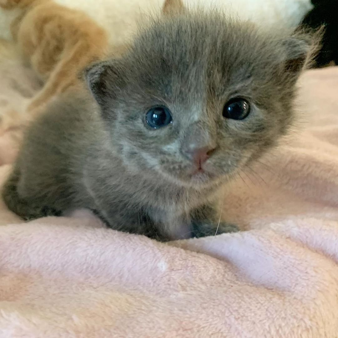 Mini Cat Town Kitten Rescue On Instagram Buzz Bee And Bumble Are Learning To Walk Today In 2020 Kitten Rescue Cats Kitten