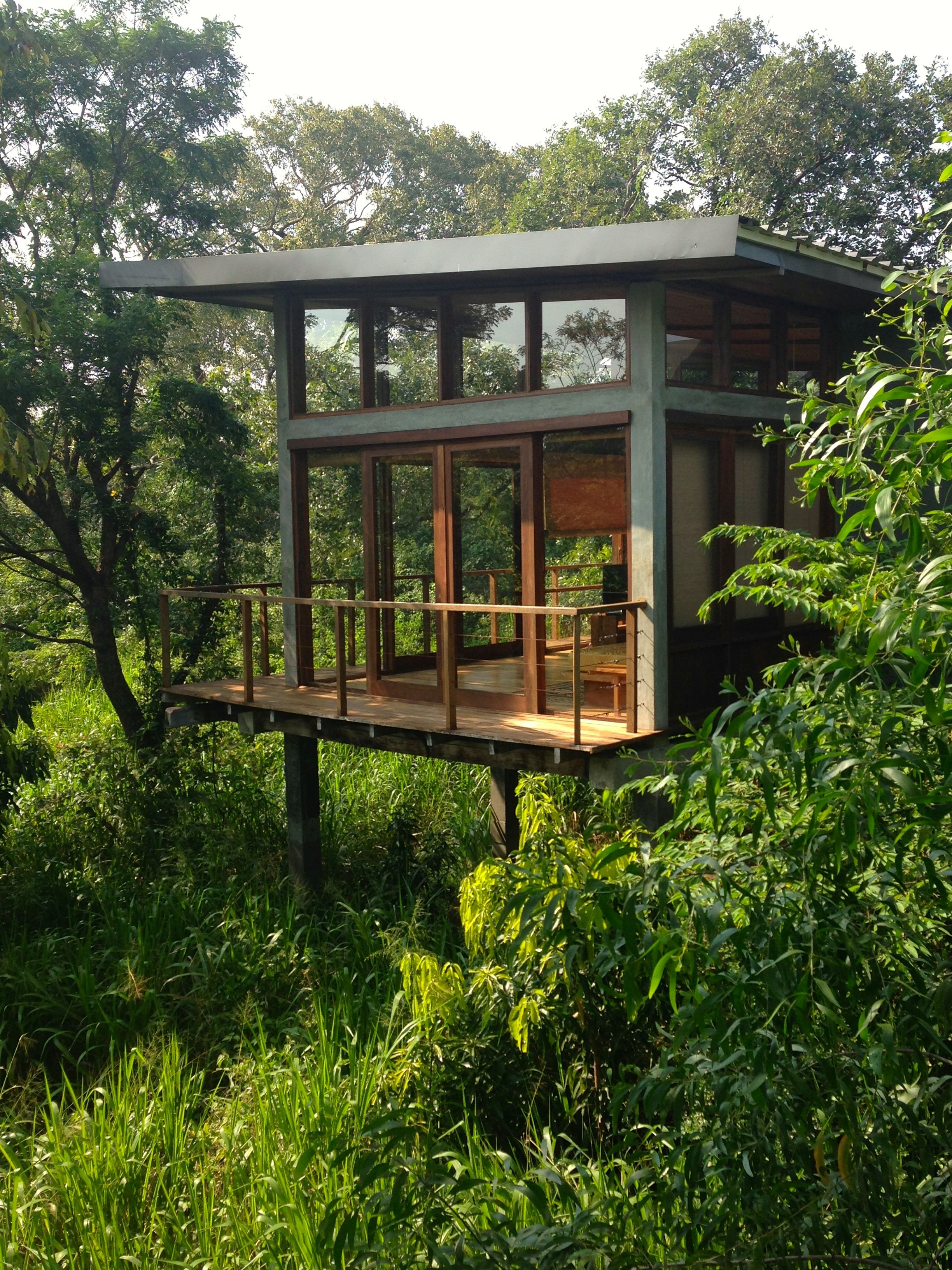 A glass house in the sri lankan jungle skywithlemon for Modern tree house designs