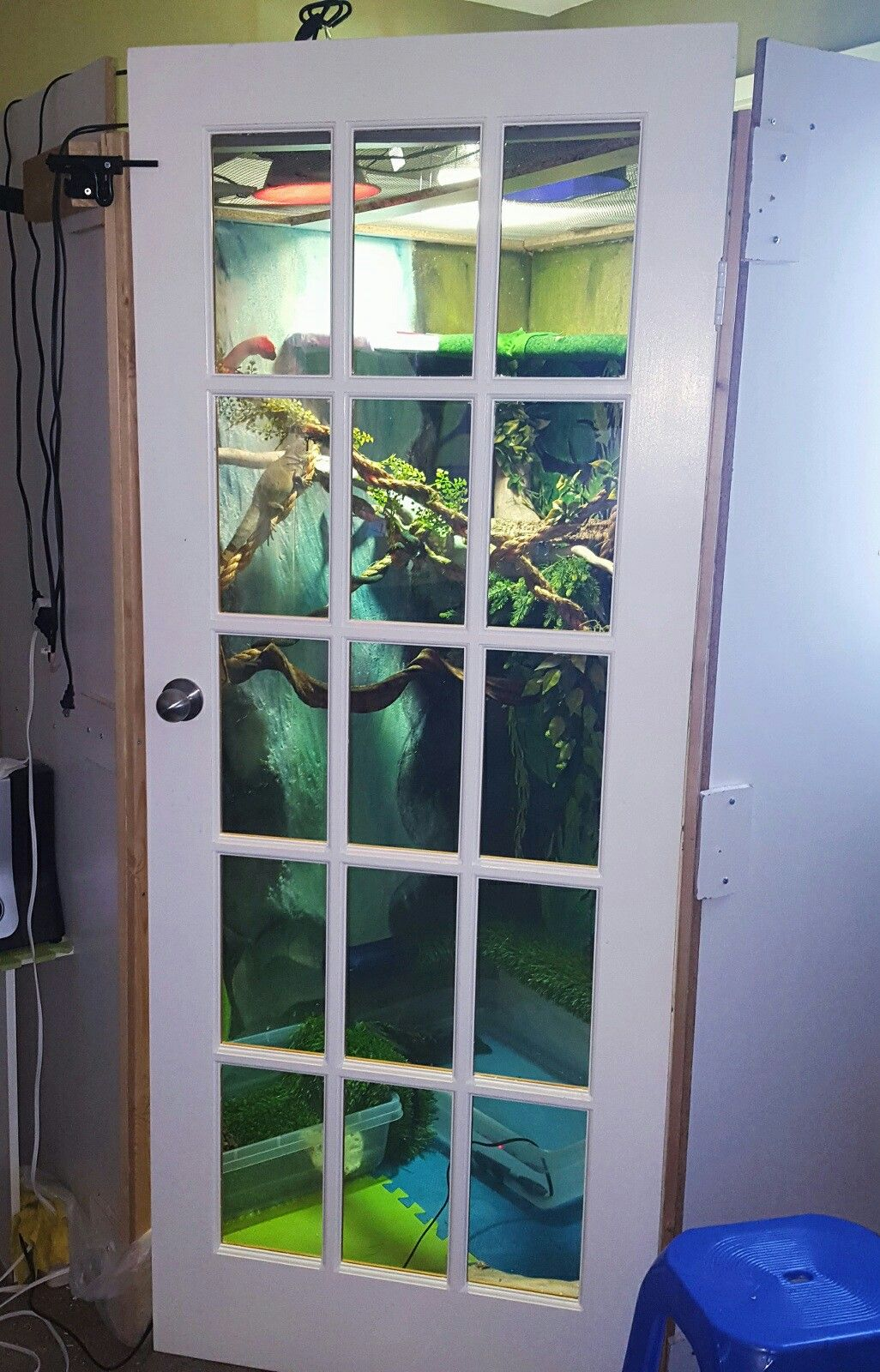 Diy Chinese Water Dragon Enclosure Walk In 2nd Pic Animal Ideas