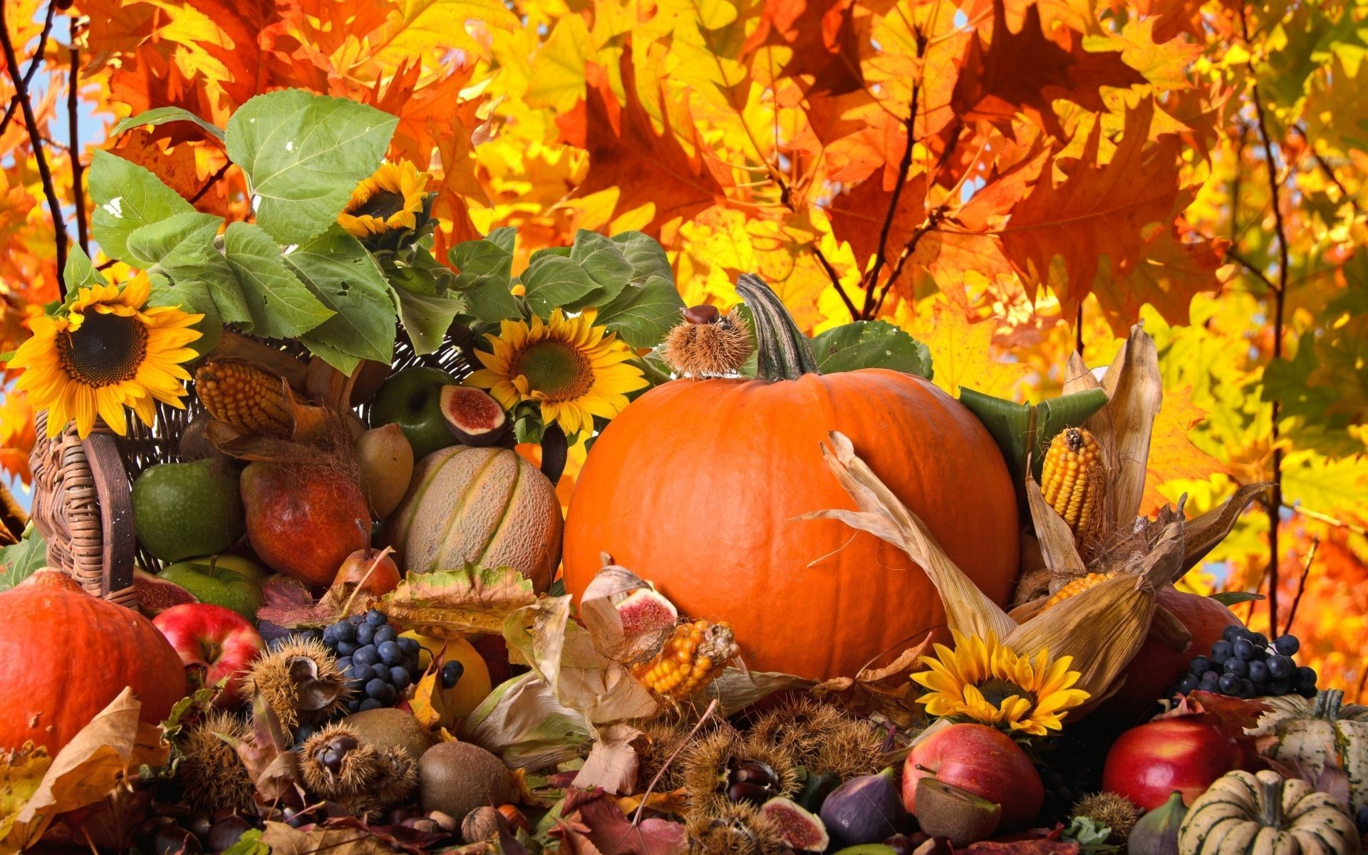 Pin By Marion Demilio On Mobile Screensaver Thanksgiving Wallpaper Free Thanksgiving Wallpaper Thanksgiving Background
