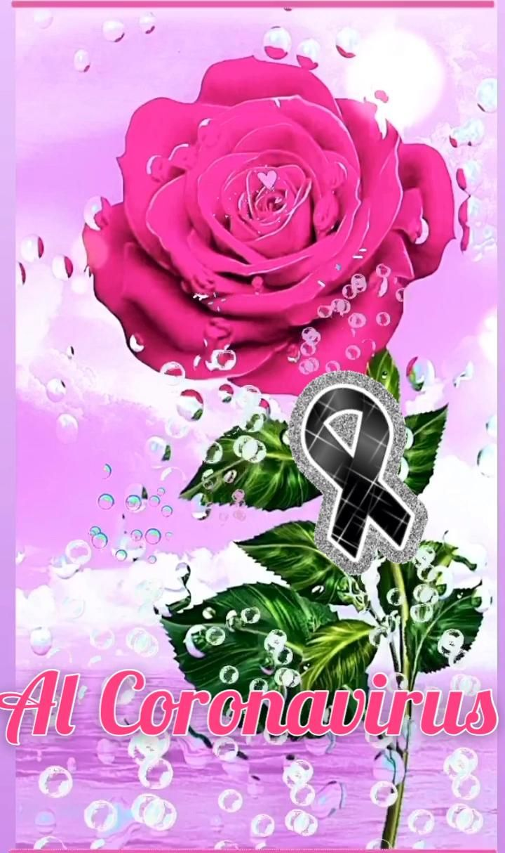Una Rosa por todos ellos