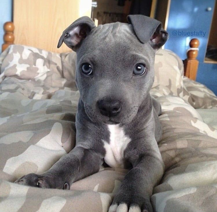 Cute Puppy Dog Animal Pets Cute Animals Puppies Baby