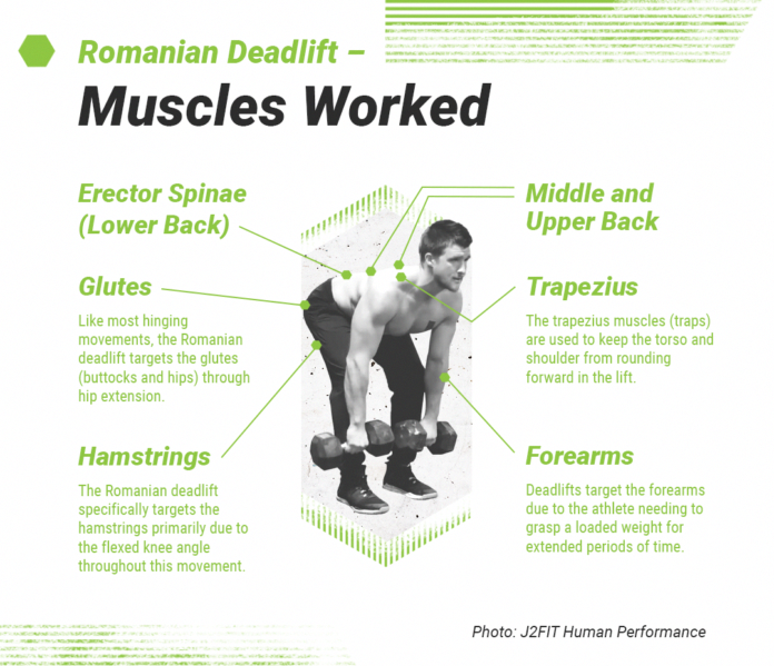 Romanian Deadlift Used For Extreme Muscle Growth And Strength - GymGuider.com