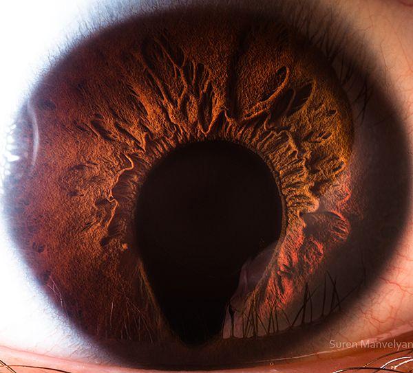 iris - eye ?!