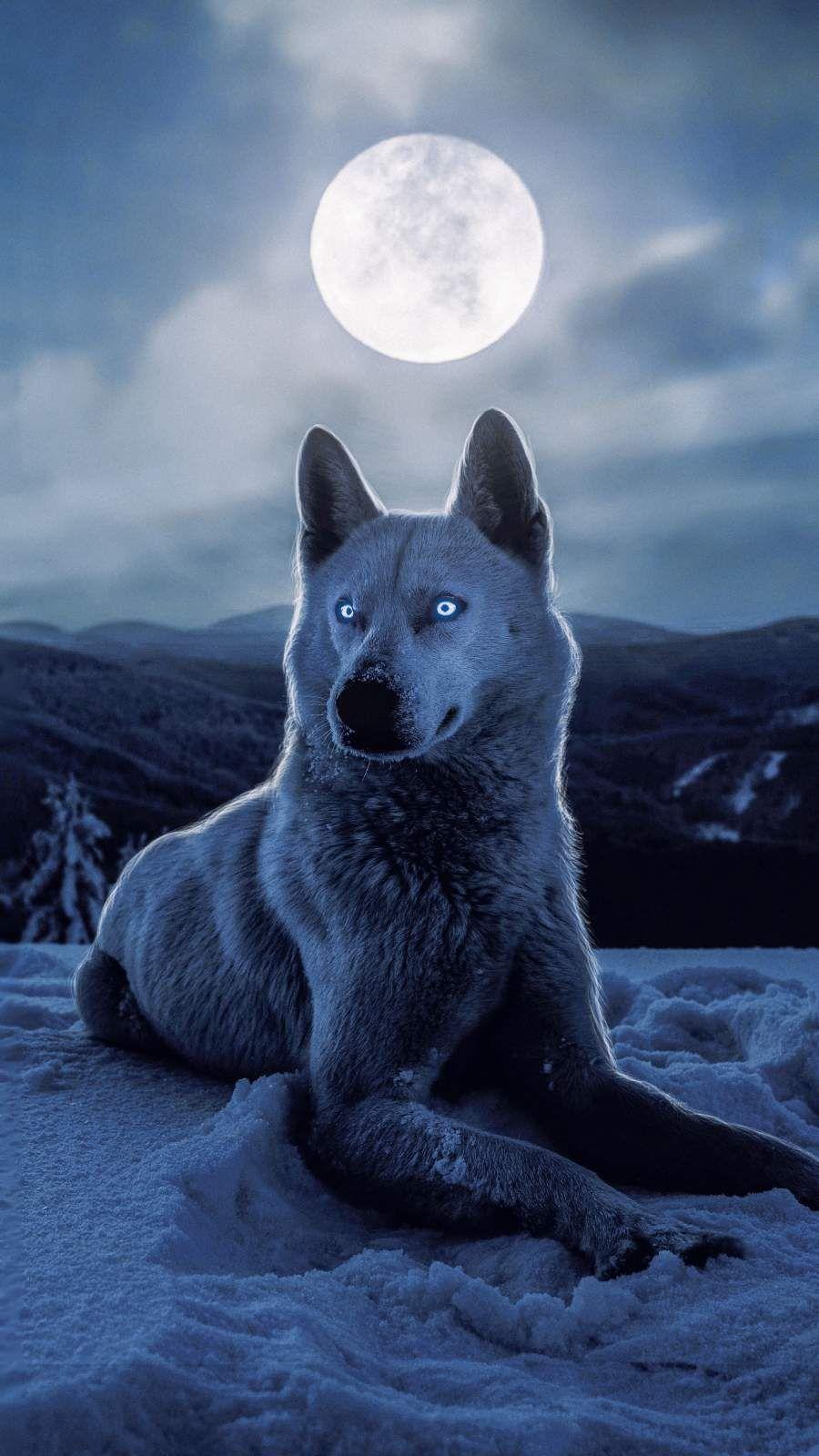 White Wolf Iphone Wallpaper 動物 おしゃれな壁紙背景 壁紙