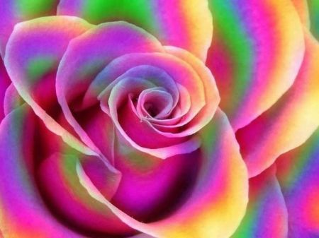 rainbow rose 3d and cg wallpaper id 1526151 desktop nexus abstract beautiful flowers. Black Bedroom Furniture Sets. Home Design Ideas