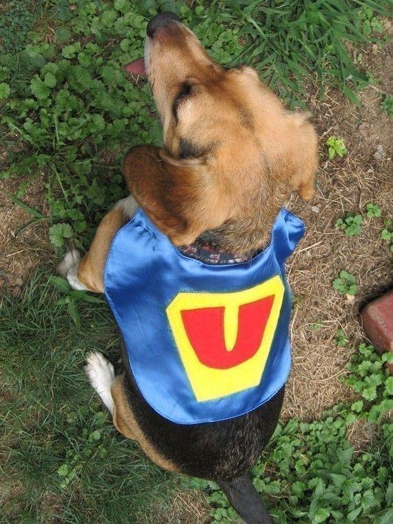 Superhero Pet Capes Custom Initial Dog Cat | Craft Corner