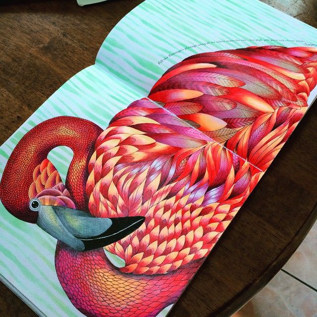 Flamingo From Animal Kingdom Colouring Book Mais