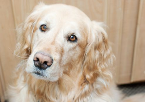 5 tips to improve your dog's joint health