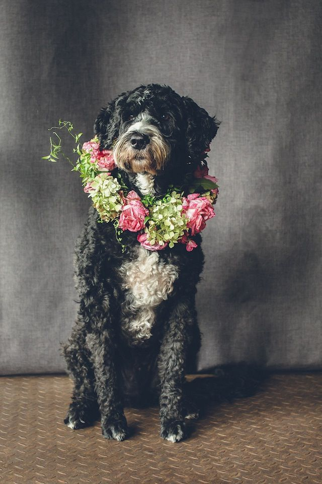 Dog flower collar ⎟ I Heart Weddings and Flower Talk ⎟ see more on: burnettsboards.co...