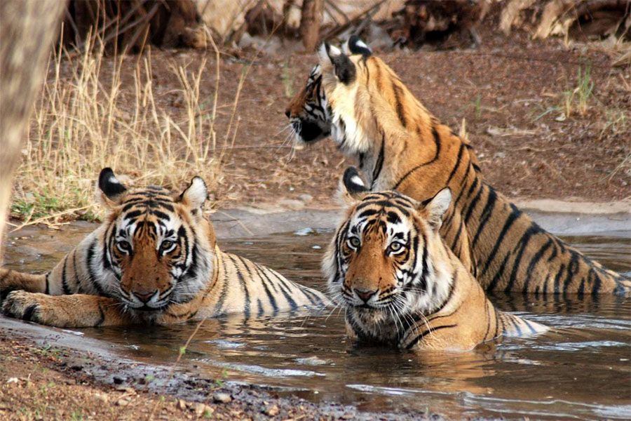 Jaipur Ranthambhore Day Tour Wildlife sanctuary