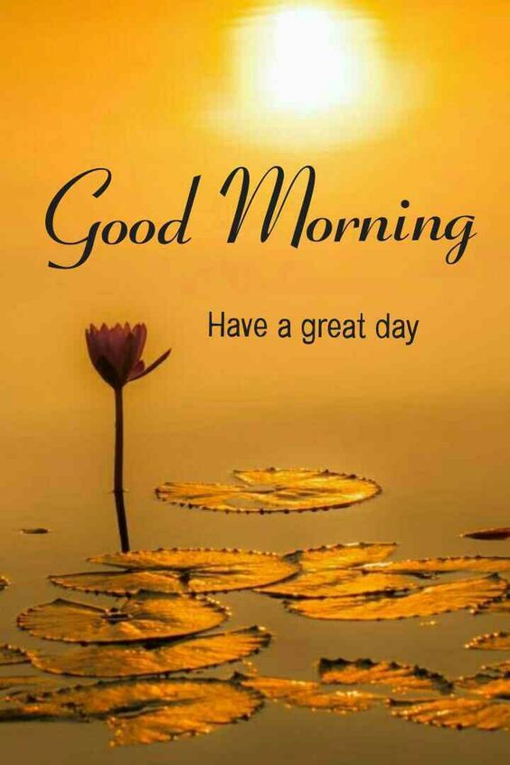 Latest Good Morning Images - GIFS Downloads 2020 - Lyrics Story   Good  morning nature, Good morning picture, Good morning beautiful quotes