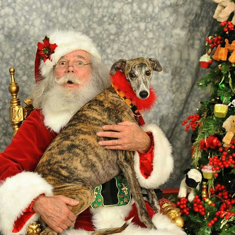 Here's Blossom with Santa! Sign up for your Santa photos today on our website!