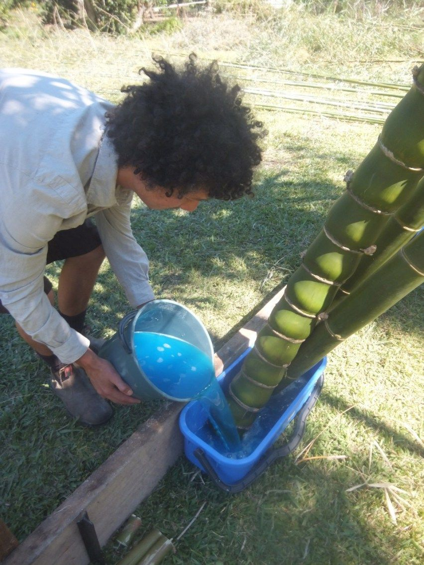 Treating Bamboo Using Transpiration | Home decor | Bamboo