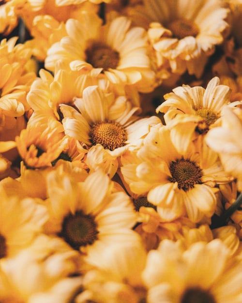 اجمل بوكيه ورد طبيعي صور اجمل بوكيه ورد طبيعي جميل Zina Blog Yellow Flower Wallpaper Flower Aesthetic Flower Pictures