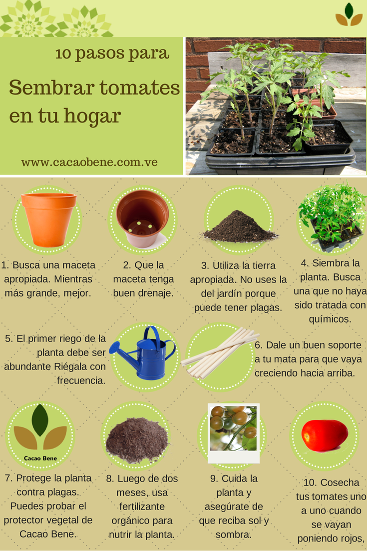 Tener Un Cultivo En Casa Es Sencillo Aprende Paso A Paso C Mo  ~ Como Cultivar Tomates En El Huerto