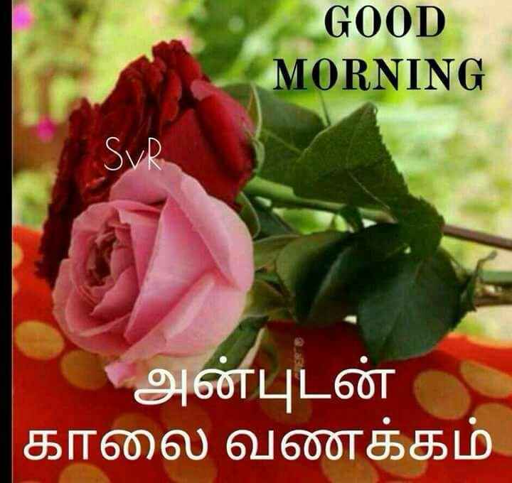 Good Morning Wishes Quotes In Tamil Good Morning Anbudan Kaalai