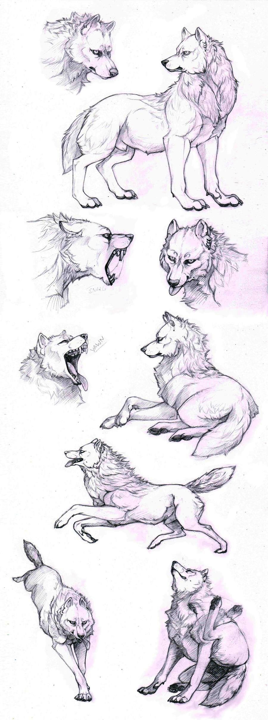 How to draw a wolf - different poses: howling, lying, standing ...