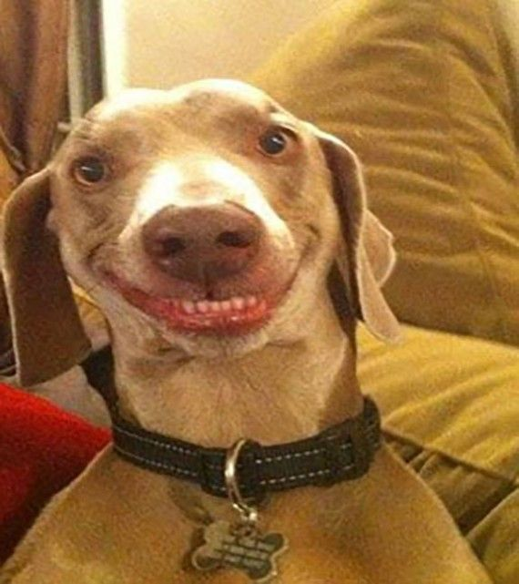 Top 30 Funny And Smiley Dog Faces Funny Dog Faces Smiling Dogs