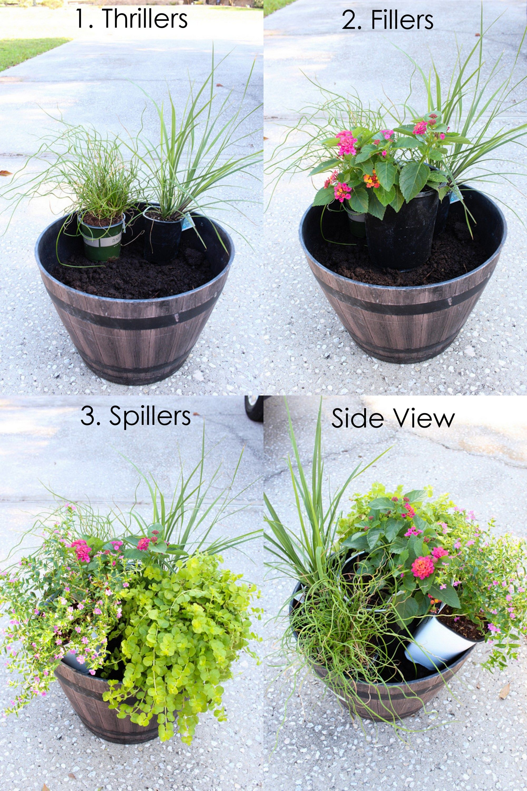 Plant Summer Flower Pots that will Thrive - Within the Grove