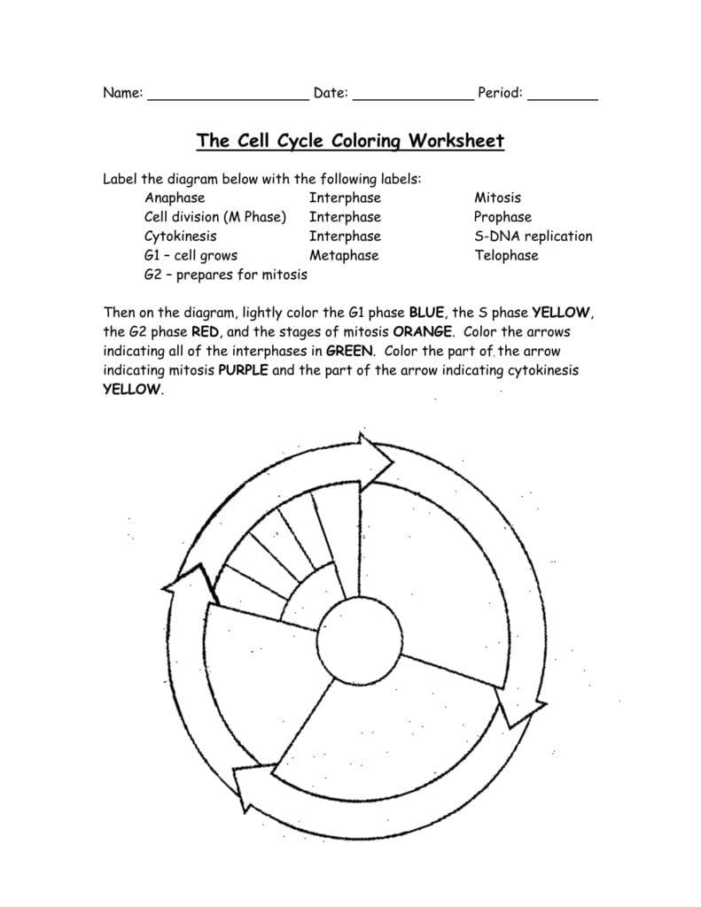 medium resolution of The Cell Cycle Coloring Worksheet   Cell cycle