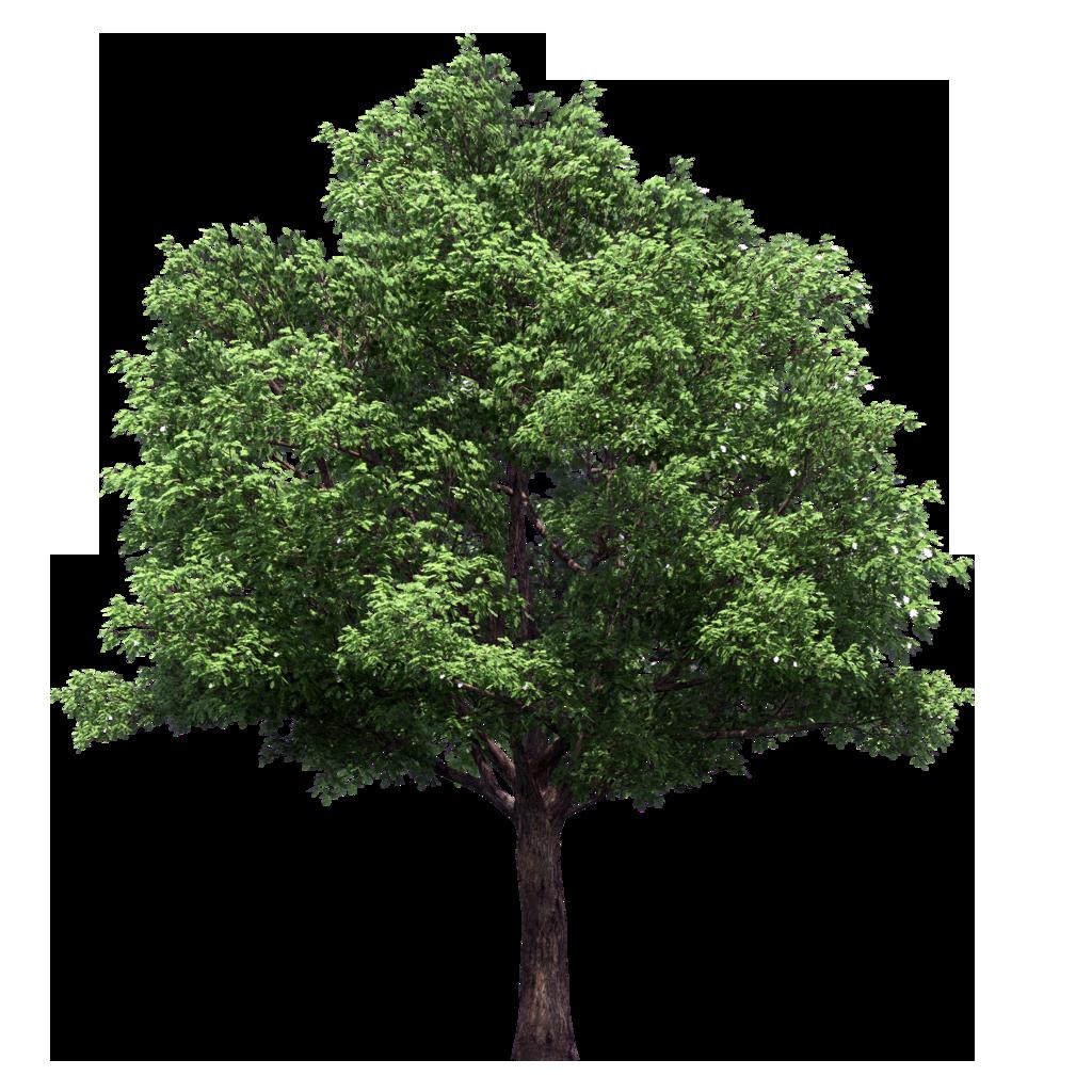 Tree Plan Texture Png | www.pixshark.com - Images ...