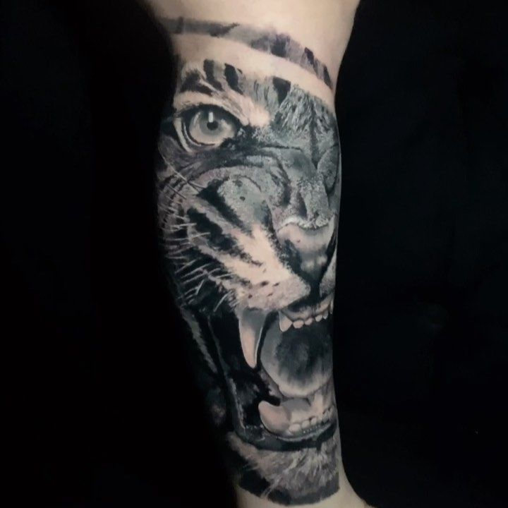 Tattoo da @_taissa.lopes, primeira etapa. Muito obrigado pela confiança 🙏🏻🙏🏻. . #saojosedoriopreto #tattoo2me @revista_tattoo_ink #tattoodo #thebesttattooartists #inkedmag #realisticink #realistictattoo #tigretattoo #tattooinspiration #tiger #tigertattoo #animaltattoo #realismotattoo #intenzepride @musotoku #tigre