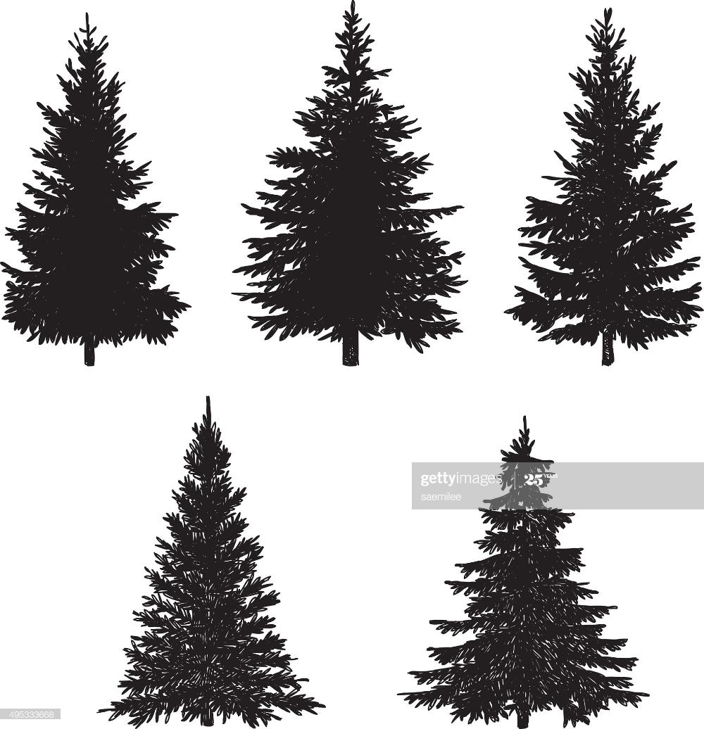 Vector Illustration Of Pine Tree Tree Doodle Vector Illustration Illustration