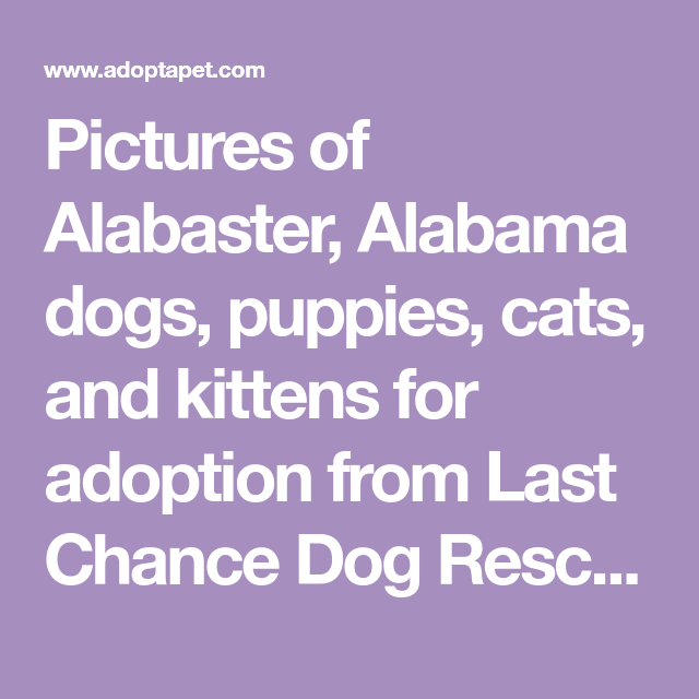 Pictures Of Alabaster Alabama Dogs Puppies Cats And Kittens